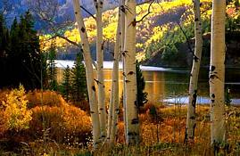 tn_Aspens__Shade__1394_2.jpg